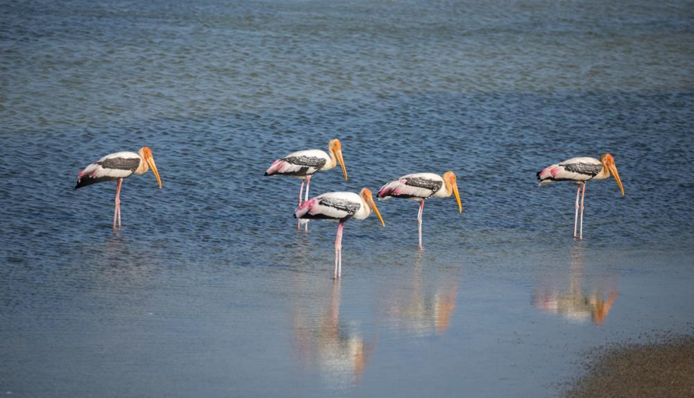 Trois parcs nationaux moins fréquentés à visiter au Sri Lanka