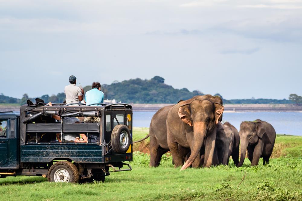 8 activités insolites à faire au Sri Lanka