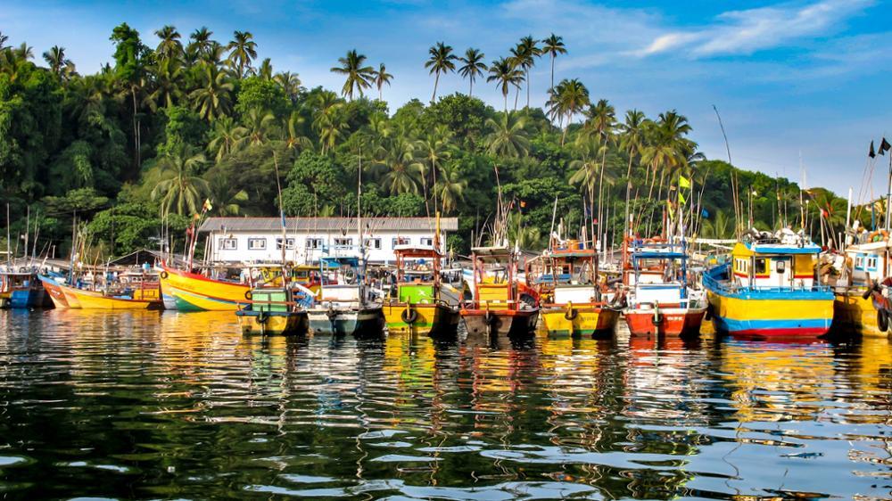 Observer la baleine bleue au Sri Lanka !