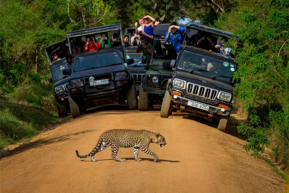 2 parcs nationaux idéaux pour un safari au Sri Lanka