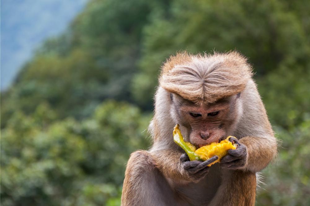 Les animaux à voir au Sri Lanka